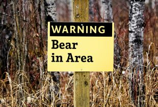 How to Prevent (and Survive) a Bear Attack