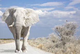Ghost Cities & White Elephants