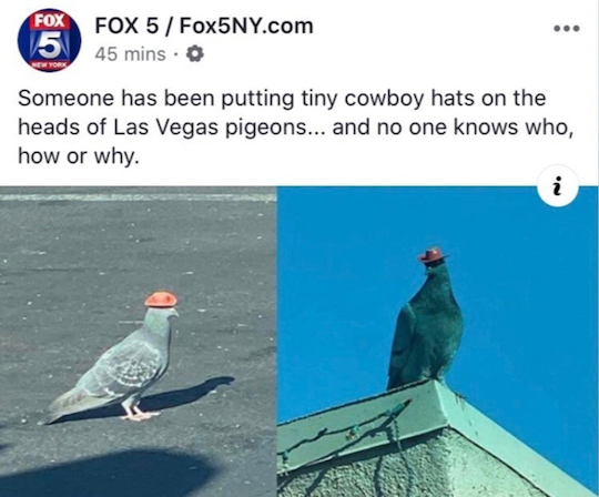 Someone has been putting tiny cowboy hats on the heads of Las Vegas pigeons... and now one knows who, how, or why